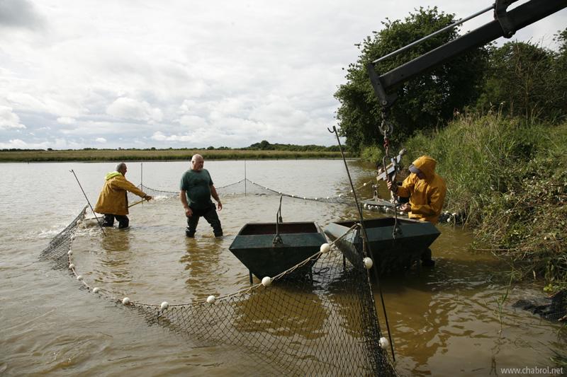 installation des bennes à poissons