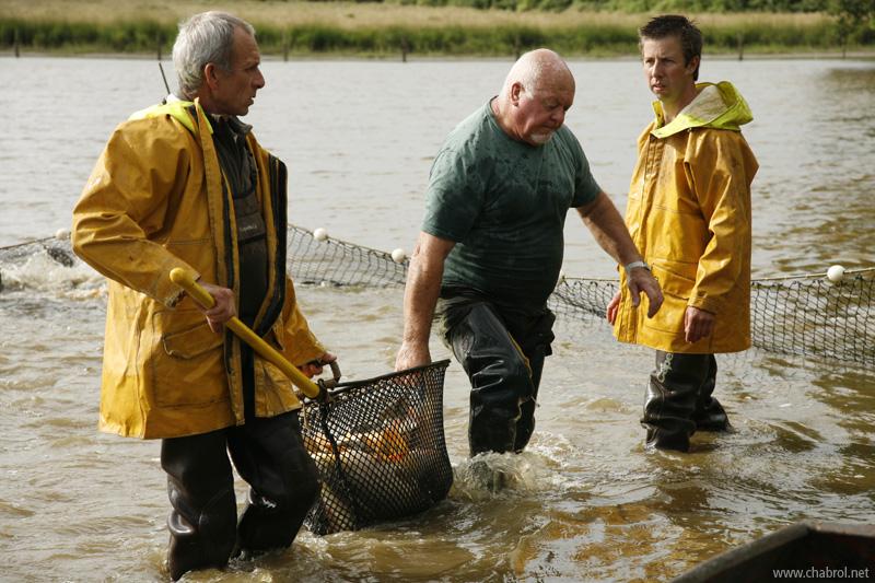 Pêche à l'épuisette des carpes